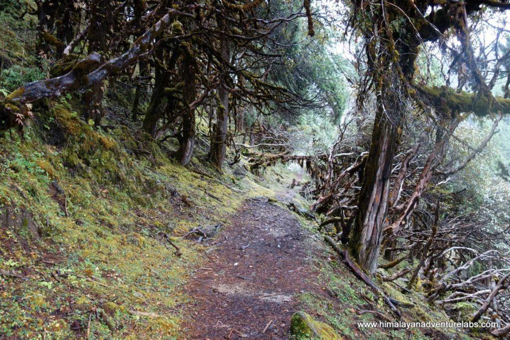 yangri-peak-trail